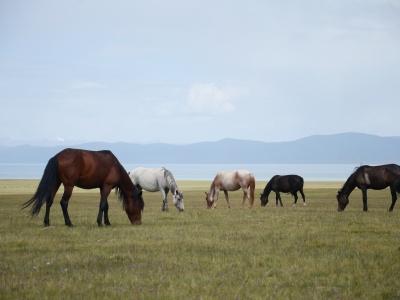 Кыргызстан страна кочевников